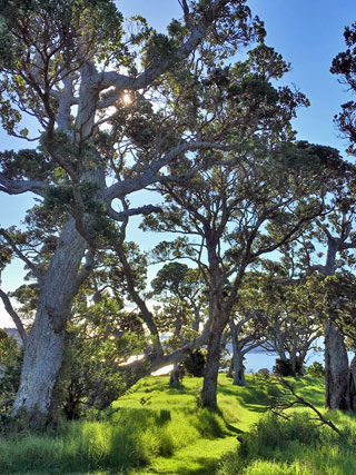 Waiheke Island bush with Walking By Nature tours