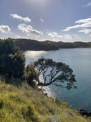 Waiheke Island Bush and Beach Walk with Walking By Nature