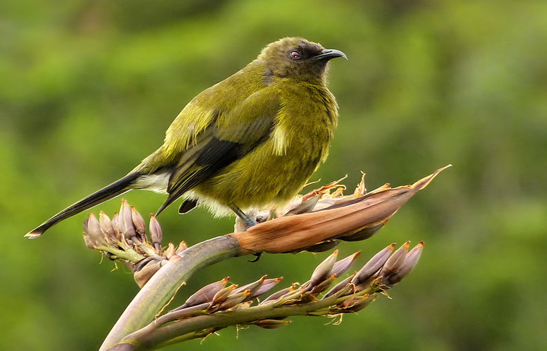 Working together to protect Waiheke Island birds