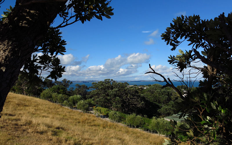 A nicely framed Waiheke Island photo with interesting clouds